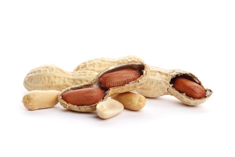 El cacahuete secado machacó el primer Cacahuetes secados en el fondo blanco fotografía de archivo libre de regalías