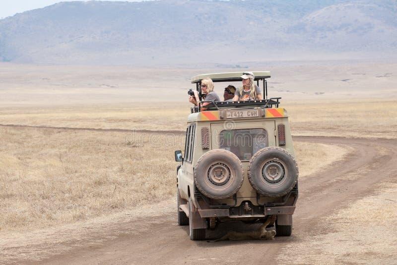 El cachorro de Lion Panthera Leo está mintiendo debajo del jeep del safari fotografía de archivo