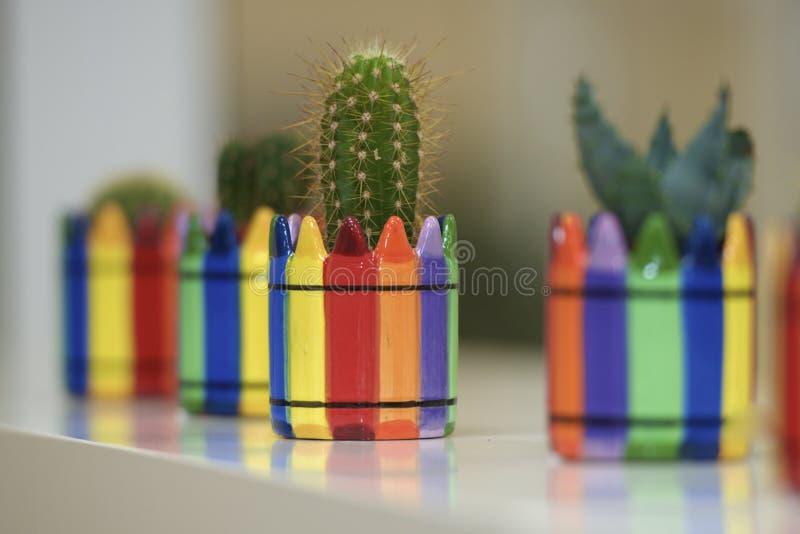 El cactus de la oficina florece el lugar de trabajo hermoso de la flor de las agujas del buen día del humor imágenes de archivo libres de regalías