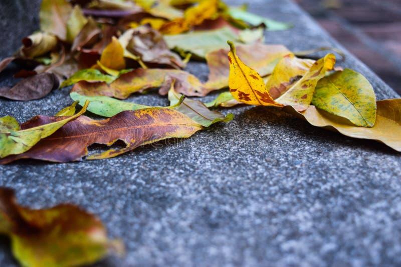 El caer amarilla se va en pasos del granito el tiempo del otoño foto de archivo