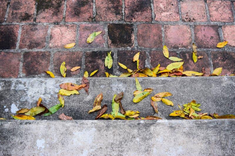 El caer amarilla se va en pasos del granito el tiempo del otoño fotos de archivo libres de regalías