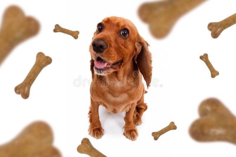 El caer de la comida de perro fotografía de archivo libre de regalías