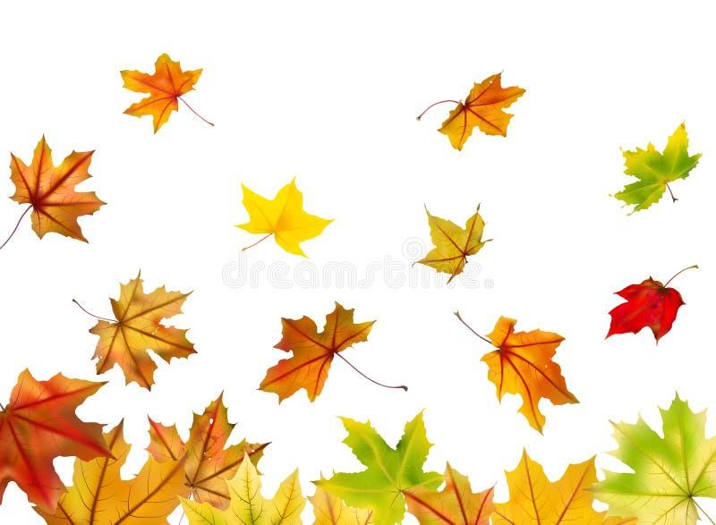El caer de las hojas de arce libre illustration