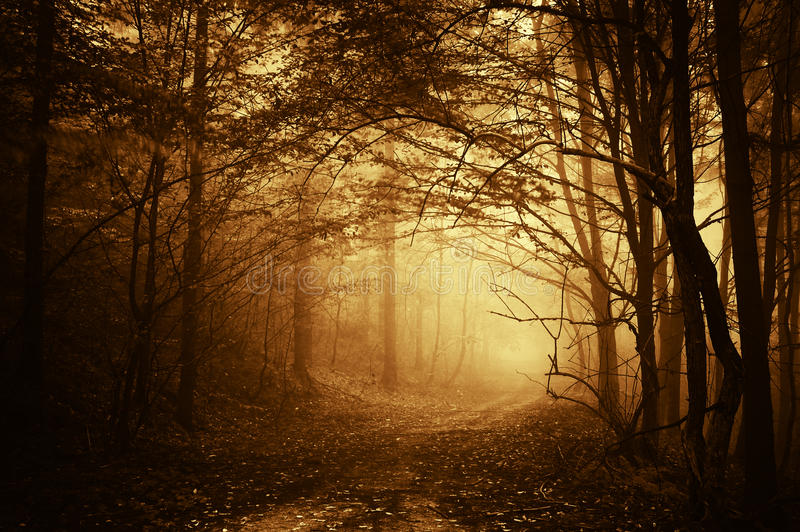 El caer ligera caliente en un camino en un bosque oscuro foto de archivo libre de regalías