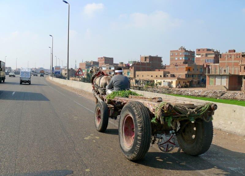 EL CAIRO, EGIPTO - 9 DE NOVIEMBRE DE 2008: Un montar a caballo desconocido del hombre en un carr fotografía de archivo libre de regalías