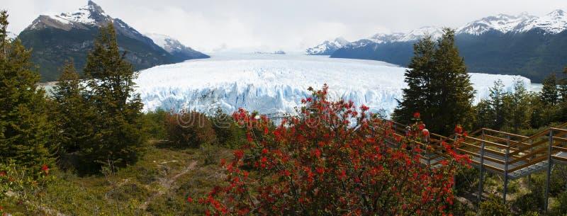 El Calafate, glaciärnationalpark, Patagonia, Argentina, Sydamerika royaltyfria foton