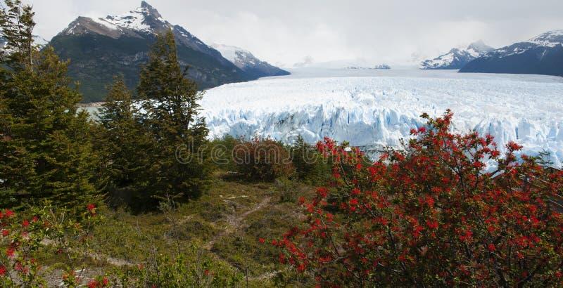 EL Calafate, parque nacional de geleiras, Patagonia, Argentina, Ámérica do Sul foto de stock royalty free