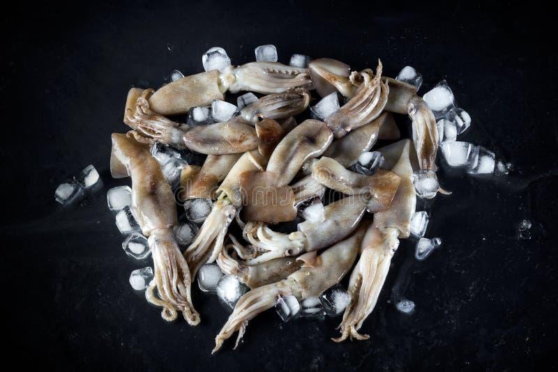El calamar fresco foto de archivo