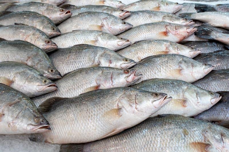 El calcarifer de Lates en el mercado de pescados, mordedor pesca fotos de archivo