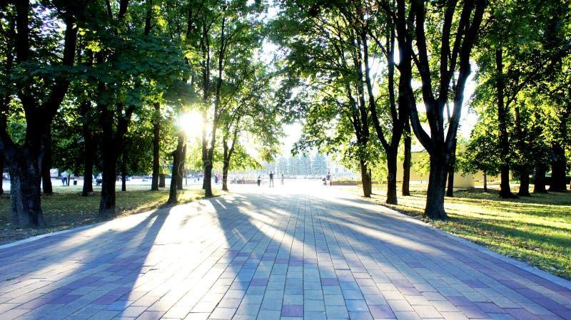 El callejón del parque en la puesta del sol imagenes de archivo
