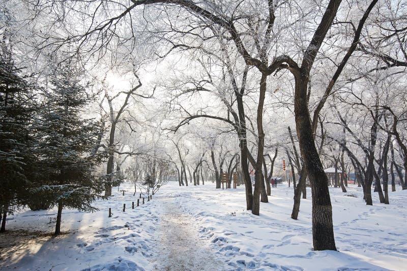 El callejón y los árboles escénicos imagen de archivo libre de regalías