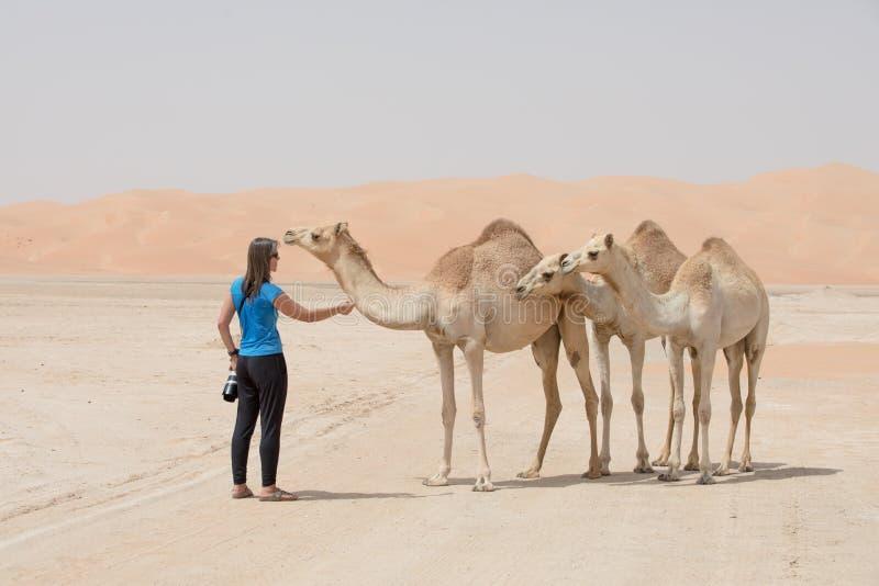 El camello del bebé se acerca a un fotógrafo imágenes de archivo libres de regalías