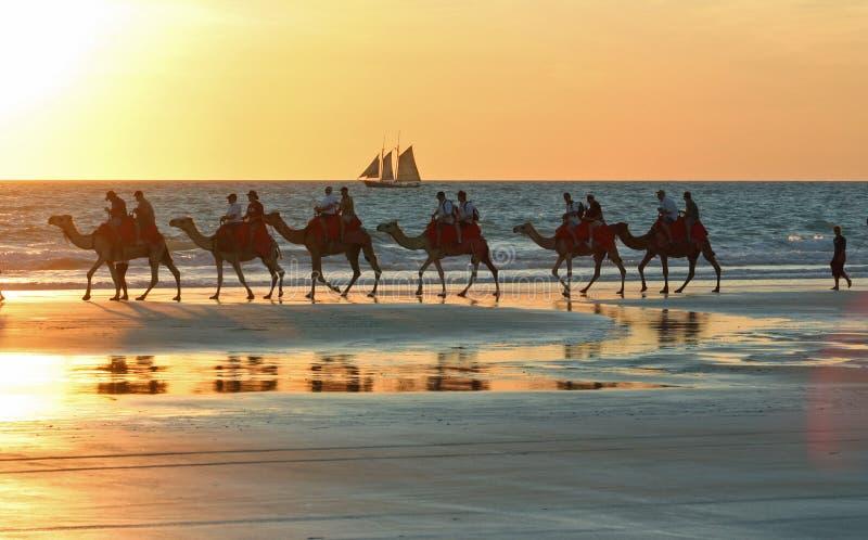 El camello viaja en la playa Broome Broome, Australia occidental del cable fotografía de archivo libre de regalías