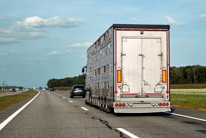 El camión lleva los animales domésticos, ganado, ganados a lo largo de la carretera fotos de archivo