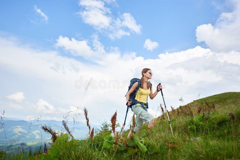 El caminante de la mujer que camina en la colina herbosa, mochila que lleva, usando el senderismo se pega en las montañas fotos de archivo libres de regalías