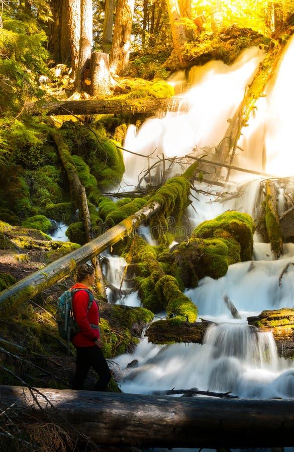 El caminante que mira Clearwater se cae composición de la vertical de Oregon fotografía de archivo libre de regalías