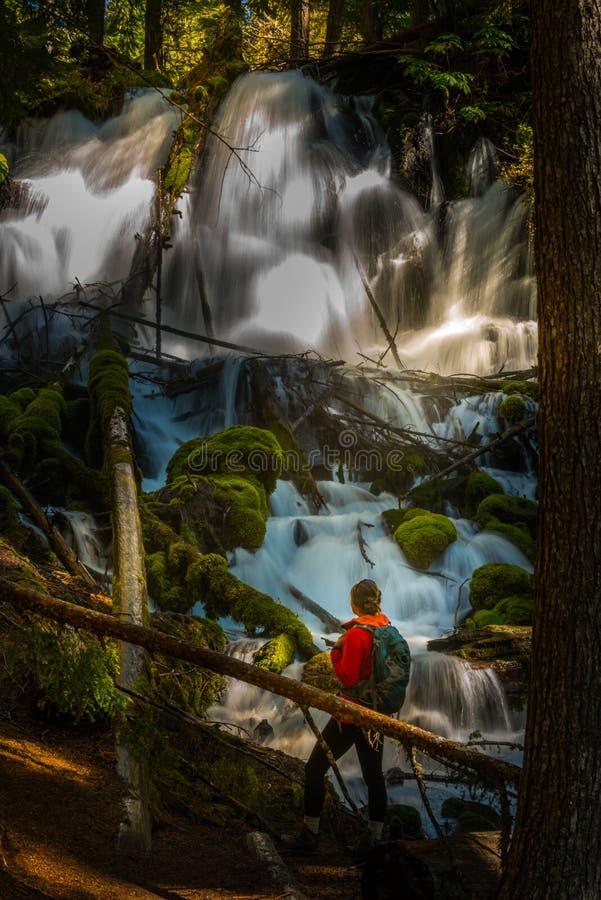 El caminante que mira Clearwater se cae composición de la vertical de Oregon imágenes de archivo libres de regalías