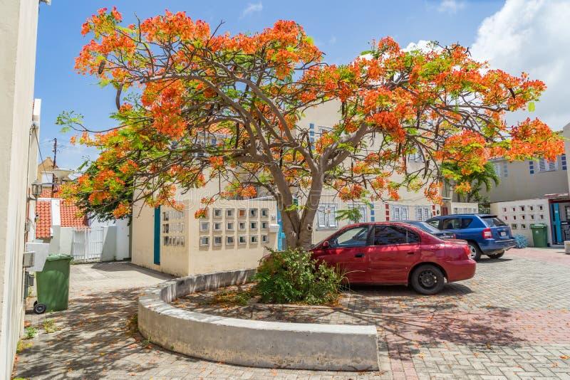 El caminar alrededor de las opiniones de Otrobanda Curaçao imagen de archivo libre de regalías