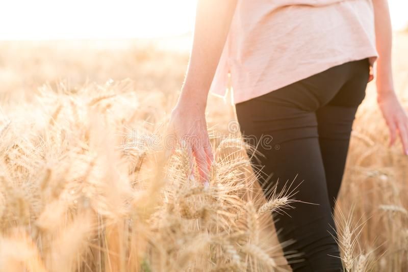El caminar de la mujer y oídos conmovedores del trigo, efecto de la luz del sol imagen de archivo libre de regalías
