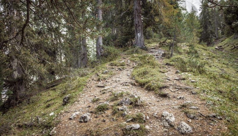 El caminar de largo una trayectoria pac?fica de la monta?a en los di Funes de Valle en las dolom?as italianas fotos de archivo libres de regalías