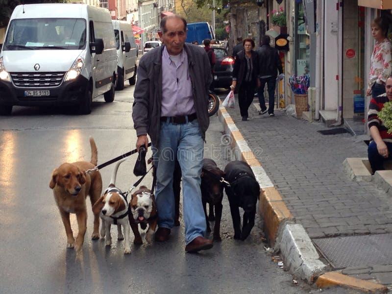El caminar de los perros imagen de archivo libre de regalías