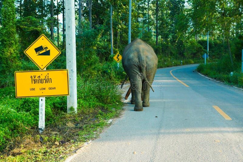 El caminar del elefante solo en la carretera nacional ascendente de la colina fotografía de archivo libre de regalías