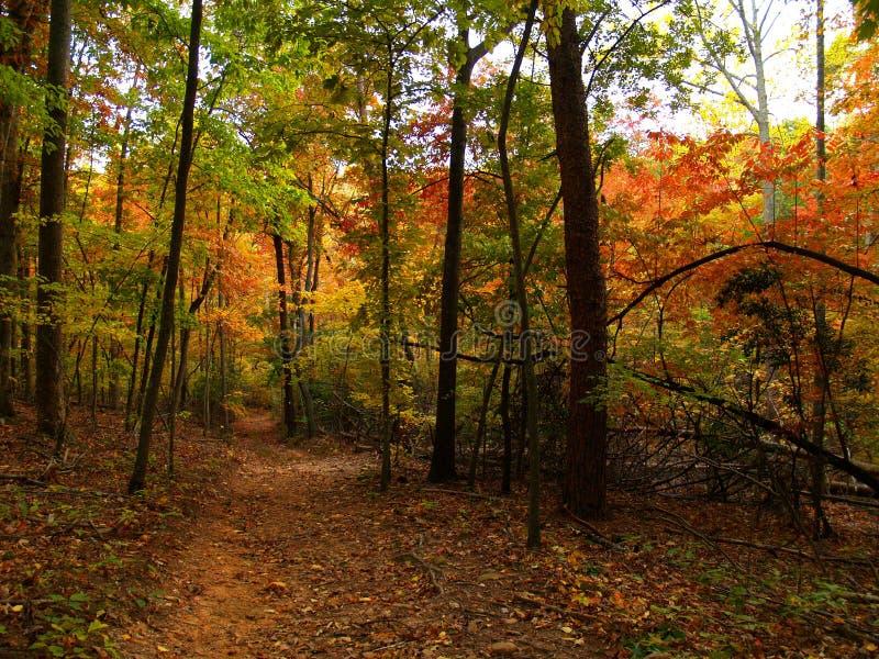 El caminar del otoño fotografía de archivo libre de regalías