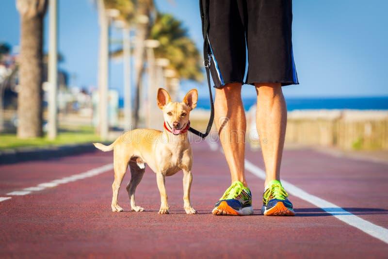 El caminar del perro y del dueño imagen de archivo libre de regalías