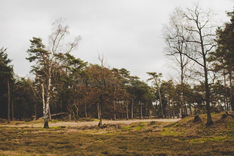El caminar en el bosque imagen de archivo