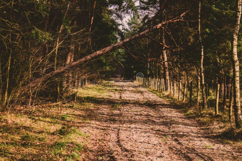 El caminar en el bosque imagenes de archivo