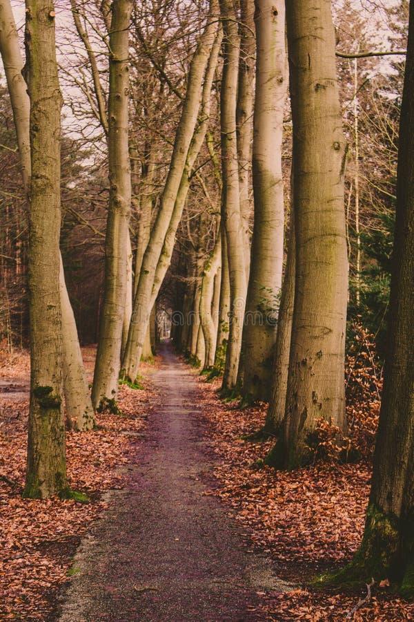 El caminar en el bosque imágenes de archivo libres de regalías