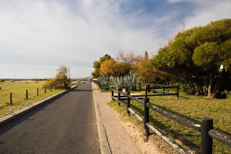 El caminar en camino por la playa arenosa con los árboles en tiempo soleado imagen de archivo libre de regalías