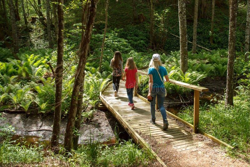 El caminar en el bosque fotos de archivo