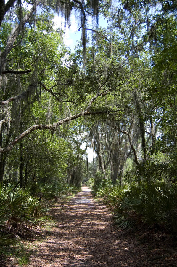 El caminar en el parque imagen de archivo libre de regalías