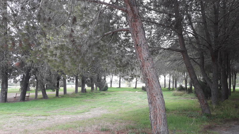 El caminar en el parque al lado del lago de sal Larnaca Chipre foto de archivo libre de regalías