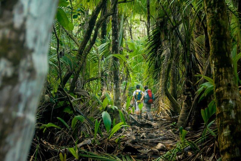 El caminar en la selva del Corcovado fotografía de archivo libre de regalías