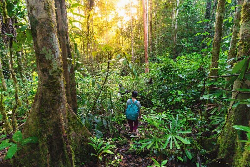 El caminar en la selva virginal densa fotos de archivo libres de regalías