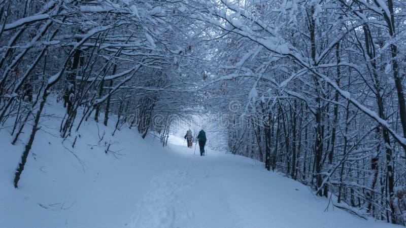 El caminar en las montañas en Rumania durante condiciones del invierno crudo fotografía de archivo