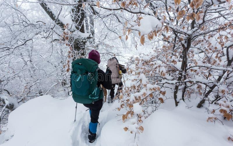 El caminar en las montañas en Rumania durante condiciones del invierno crudo imagen de archivo libre de regalías