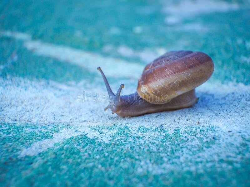 El caminar lento de caracoles fotos de archivo