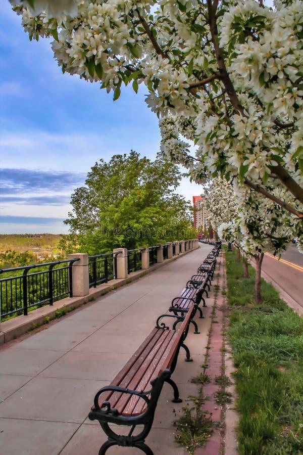 El caminar a lo largo de una 'promenade' floreciente fotografía de archivo libre de regalías