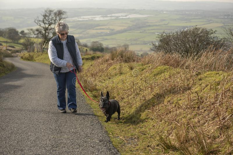 El caminar mayor del perro de la mujer y del terrier fotografía de archivo