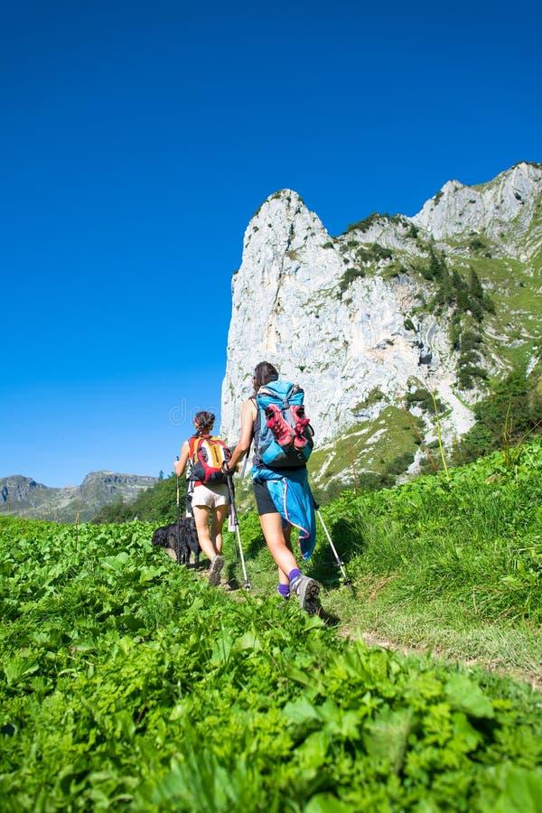 El caminar nórdico de dos colegas del trabajo en el rastro de montaña fotografía de archivo libre de regalías