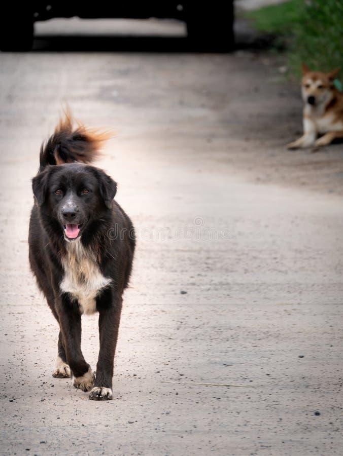 El caminar negro del perro perdido foto de archivo