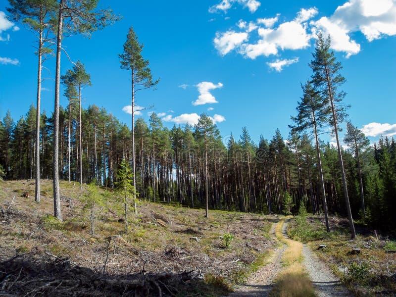 El caminar recreativo en aventura de la naturaleza con ejercicio al aire libre sano del verano en un camino rural, caminando en f imagen de archivo