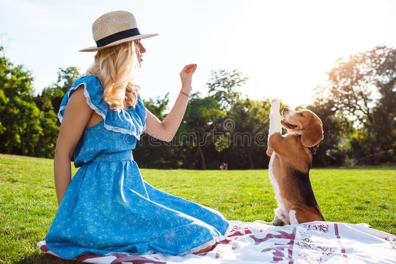 El caminar rubio hermoso joven de la muchacha, jugando con el perro del beagle en parque fotografía de archivo libre de regalías
