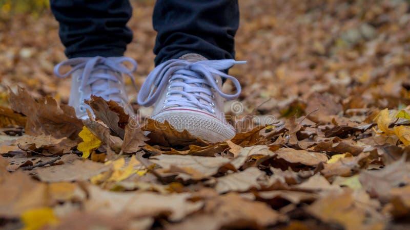 El caminar a través de las hojas caidas imagenes de archivo