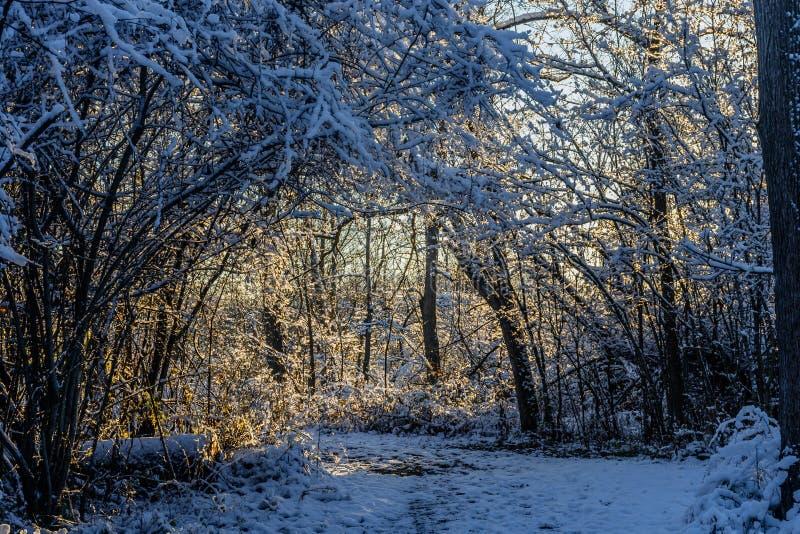 El caminar a través del bosque frío fotografía de archivo