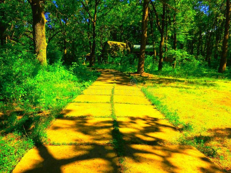 El camino amarillo del ladrillo el mago de Oz imagen de archivo