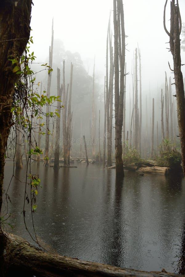 El camino bordea el bosque imagen de archivo libre de regalías